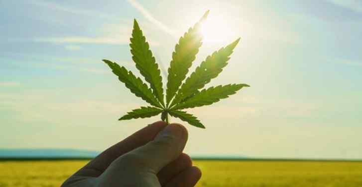 Cannabis trading still illegal